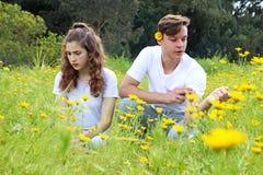 一对少年年轻夫妇获得乐趣在菊花的领域 库存图片