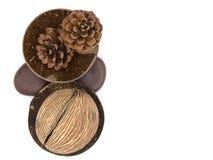 一干othalanga和一些干杉木锥体的顶视图在干椰子壳 免版税库存照片