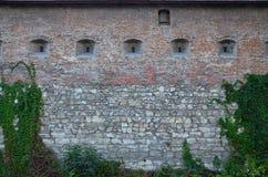 一座古老城堡的大石墙,长满与巨型的常春藤在利沃夫州, Ukrain分支 库存照片