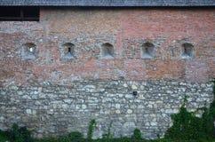 一座古老城堡的大石墙,长满与巨型的常春藤在利沃夫州, Ukrain分支 库存图片