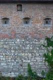 一座古老城堡的大石墙,长满与巨型的常春藤在利沃夫州, Ukrain分支 免版税库存图片