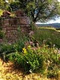 一座城堡的墙壁用草本 图库摄影