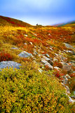 一座多小山山,在日出的薄雾 秋天红色灌木 库存图片