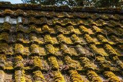 一座小屋的生苔屋顶在庭院里 库存图片