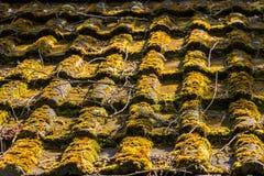 一座小屋的生苔屋顶在庭院里 免版税库存图片