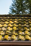 一座小屋的生苔屋顶在庭院里 免版税库存照片