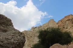 一座山、天空、云彩和一棵树的看法在以色列沙漠在Ein GEDI 免版税库存照片