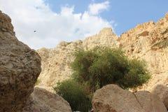 一座山、天空、云彩和一棵树的看法在以色列沙漠在Ein GEDI 免版税图库摄影
