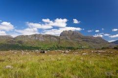 一座山的美好和平静的风景在苏格兰的高地的 免版税库存图片