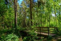 一座桥梁在森林里 库存图片
