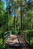 一座桥梁在森林里 免版税库存图片