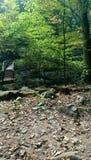 一座桥梁在森林 免版税库存图片