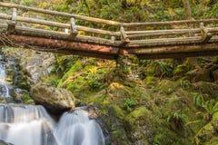 一座桥梁在森林 免版税库存照片