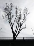 一座桥梁的剪影在树后的 免版税库存图片
