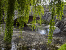 一座石桥梁的看法在水的通过在前景的下垂的树枝 免版税库存图片