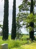 一座老老公墓在橡木树丛里 库存照片