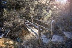 一座自然桥梁在森林里 图库摄影