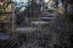 一座自然桥梁在森林里 免版税库存图片