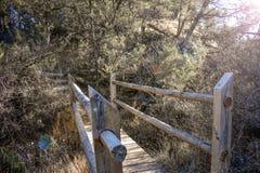 一座自然桥梁在森林里 免版税图库摄影