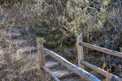 一座自然桥梁的末端在森林里 库存照片
