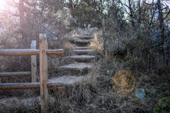 一座自然桥梁的末端在森林里 免版税库存照片