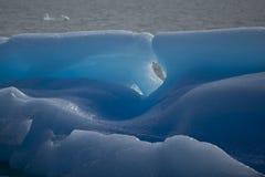 一座蓝色冰山的特殊性在湖Argentino的 免版税图库摄影