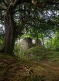 一座被破坏的城堡和一棵树在一个被放弃的海岛上 免版税图库摄影
