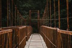 一座长的机盖走道桥梁在森林里 库存照片