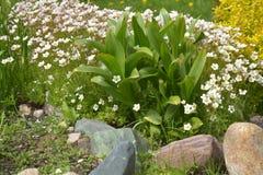 一张小花床在夏天庭院里 免版税库存图片
