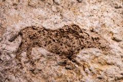一张岩石绘画在从石器时期的Catalhoyuk 免版税库存照片