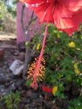 一张红色花关闭照片 库存图片
