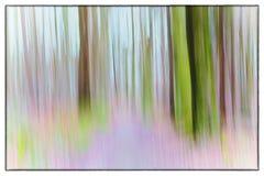 一张缓慢的快门速度上色了树照片在森林显示的绿色,桔子叶子和淡紫色颜色与退色的葡萄酒fi 免版税库存照片