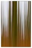 一张缓慢的快门速度在显示绿色和桔子叶子有葡萄酒框架的森林里上色了树照片  库存照片