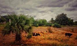 一张美好和独特的自然图片 免版税库存照片