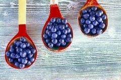一张顶上充分照片三木匙子在桌上的成熟蓝莓 新鲜的成熟水多的越桔,明亮的秋天背景 免版税库存图片