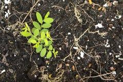 一张绿色植物表面顶视图构造了背景 库存图片