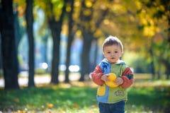 一愉快和快乐小男孩笑的情感画象 黄色飞行的枫叶,当走在秋天公园时 愉快 免版税库存照片