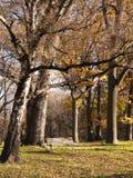 一把椅子在公园 免版税库存图片