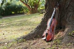 一把经典小提琴在树下 免版税图库摄影