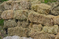 一把滚动的干草的特写镜头 库存图片