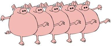 一排合唱猪 免版税图库摄影
