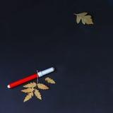 一支笔,在黑角规背景的秋叶的特写镜头在红色的 文本的,建立学校的概念地方,回到 免版税库存图片