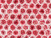 从一支红色康乃馨的花背景 免版税库存照片