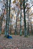 读一本书的女孩在森林里 库存图片