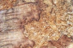 一本巨大的被锯的树日志的纹理与一个有趣的结构的 图库摄影