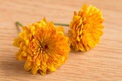一朵两朵黄色菊花花的宏观射击 免版税库存照片