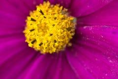 一朵五颜六色的花的特写镜头 图库摄影