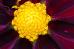 一朵五颜六色的花的特写镜头 库存图片