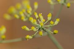 一朵五颜六色的花的特写镜头 免版税库存照片