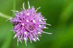 一朵五颜六色的花的特写镜头 库存照片